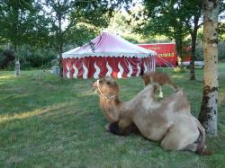 2012-07-24-erdeven-7-saints-animaux-009.jpg